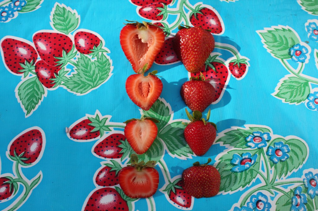 From the Top: Albion, Rosa, Eclaire, and Seascape Strawberries