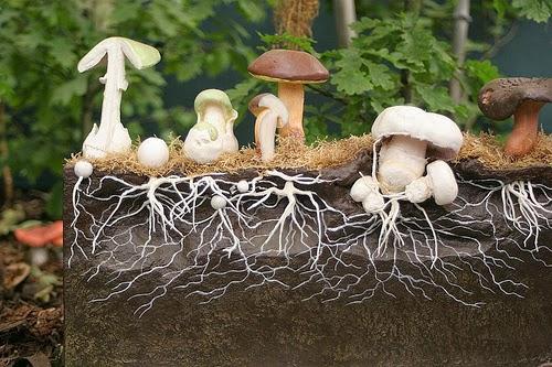 mushroom-fungus-forest-mycelia